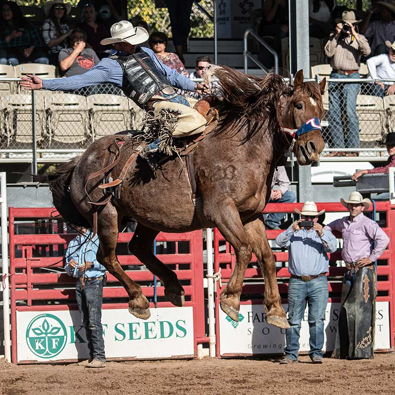 Bucking Horse at Cattle Call